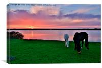 Horses at Sunset, Canvas Print
