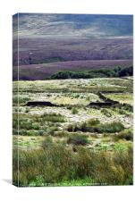 Moorland Heather, Canvas Print