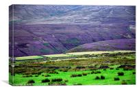 The Moors and The Heather, Canvas Print