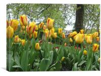 Yellow Tulips, Canvas Print