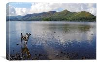 DOG HAVING A PADDLE IN DERWENTWATER IN KESWICK, Canvas Print
