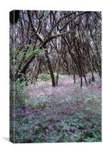 Lavender Woods on Lagomera Island, Canvas Print