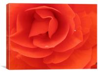 Inside a Red Rose, Canvas Print