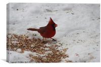 Beautiful Cardinal, Canvas Print
