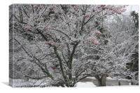 Winter Snow, Canvas Print