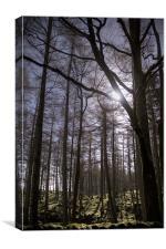Forest Light., Canvas Print