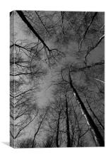 Epping  Forest trees, Canvas Print