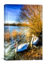 Peaceful Swans, Canvas Print
