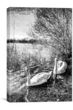 Swan Lake Art, Canvas Print