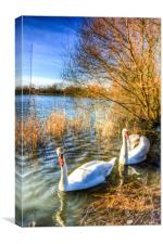 Graceful Swans, Canvas Print