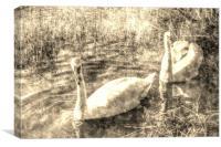Vintage Swans, Canvas Print