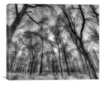 The Infared Forest, Canvas Print