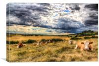 Resting Cows, Canvas Print