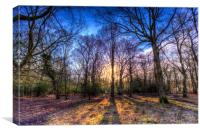 The Morning Sun Forest, Canvas Print
