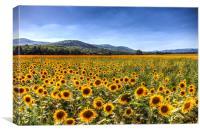 Sunflower Fields Of Summer , Canvas Print