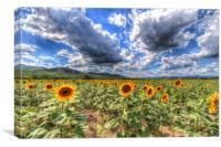 Summer Sunflower Landscape , Canvas Print