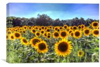 Sunflower Fields Of Dreams , Canvas Print