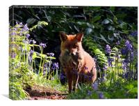 Wild Red Fox, Canvas Print