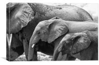 Elephant Family, Canvas Print