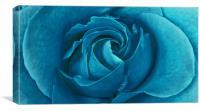 Blueberry Rose, Canvas Print