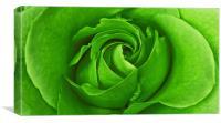 Lime Rose, Canvas Print