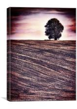Ploughed & Ready, Canvas Print