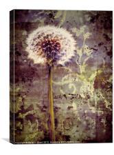 Dandelion Texture, Canvas Print