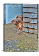 A PAIR OF WATCHFUL EYES, Canvas Print