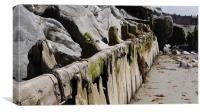 Beach wood., Canvas Print