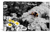 Bumble Bee., Canvas Print
