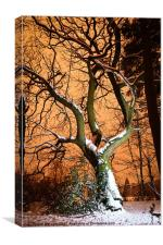 sugar coated tree., Canvas Print