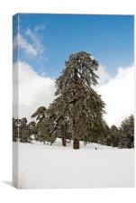 Troodos Mountains in Winter, Canvas Print