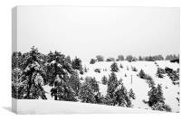 Snow at Troodos Cyprus, Canvas Print