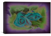 blue roses, Canvas Print
