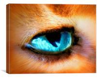 cats eye, Canvas Print