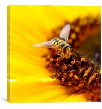 little fly, Canvas Print