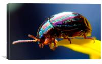 tiny beetle , Canvas Print