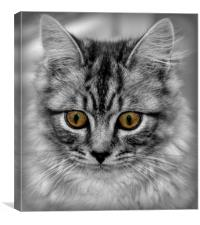 owl eyes, Canvas Print