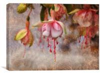 Pretty Fuchsia, Canvas Print