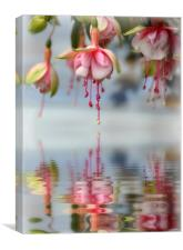 floral refections, Canvas Print