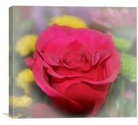 lovely red rose, Canvas Print