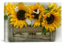 sunflowers and butterflie, Canvas Print