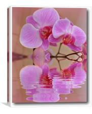 orchids reflected, Canvas Print