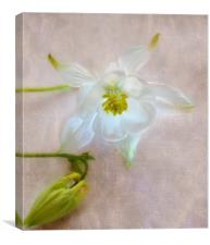 floral glow, Canvas Print