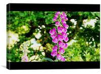 foxglove, Canvas Print