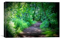 Forest Trail, Canvas Print