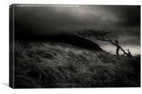 Lone Tree 0n Skye, Canvas Print