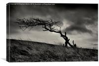 Storm Tree on Skye, Canvas Print