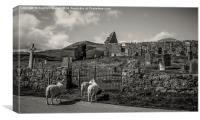 Sheep at Cill Chriosd, Skye, Canvas Print