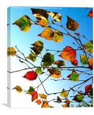 Autumn Leaves - 2, Canvas Print